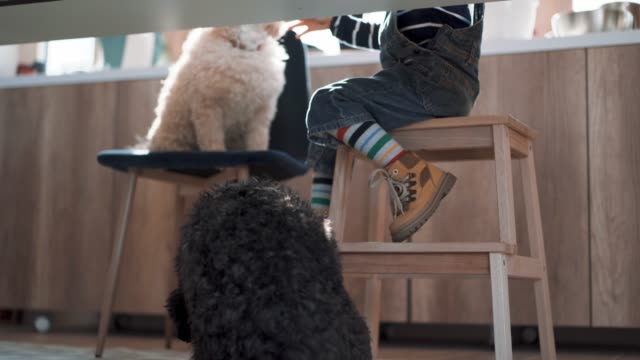 cute boy sharing his cookie with his pets - two animals stock-videos und b-roll-filmmaterial