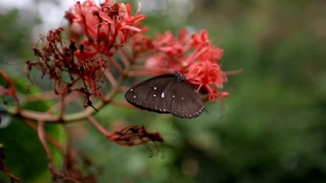Leuke bruine vlinder op een rode bloem