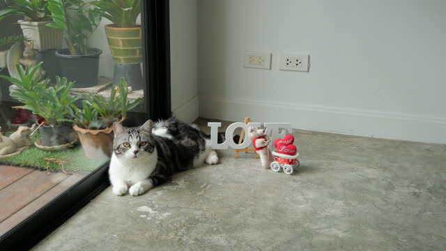 cute cat and love wording with little bear toy and red heart in living room - valentine's day stock videos & royalty-free footage