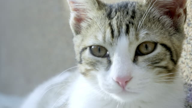 cute cat enjoying in the sunny day - cat blinking stock videos & royalty-free footage