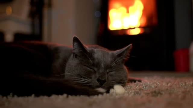 Cute Cat falling asleep in front of fire Close up