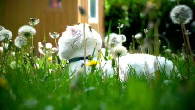cute cat in grass - exhilaration stock videos & royalty-free footage