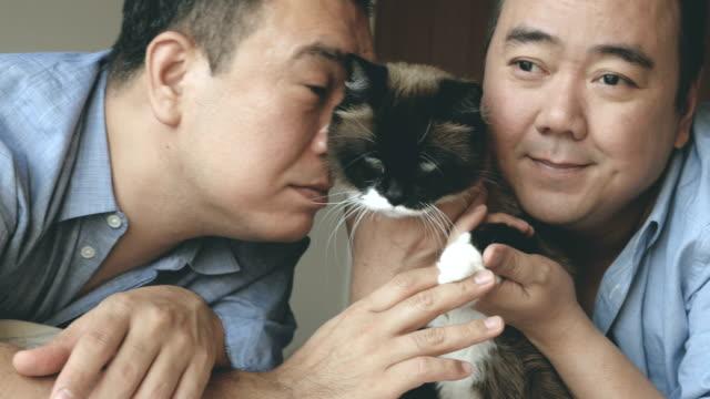 リビング ルームでかわいい猫 - 同性愛者点の映像素材/bロール
