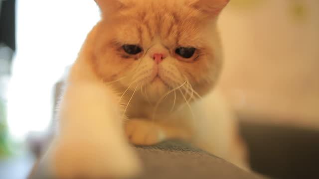 Cute cat looking at camera