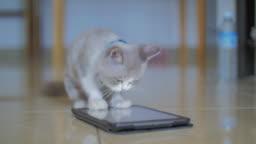 Cute cat play digital tablet