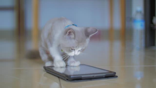 vídeos de stock, filmes e b-roll de gato fofo brincar tablet digital - animal de estimação