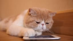 Cute cat play with smart phone