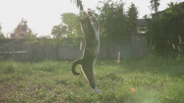 cute cat playing on the grass - jumping stock videos & royalty-free footage