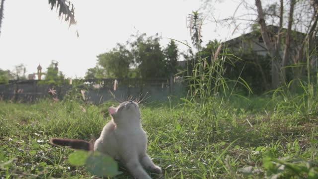 Süße Katze spielen auf dem Rasen