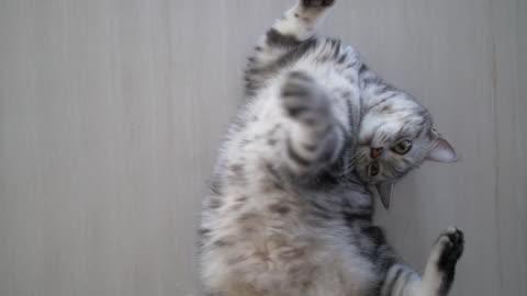 vídeos y material grabado en eventos de stock de lindo gato jugando duerme en el piso - monada