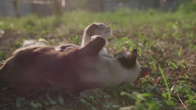 Niedliche Katze schläft auf dem Rasen.