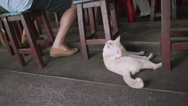 Süße Katze Rest unter dem Tisch.