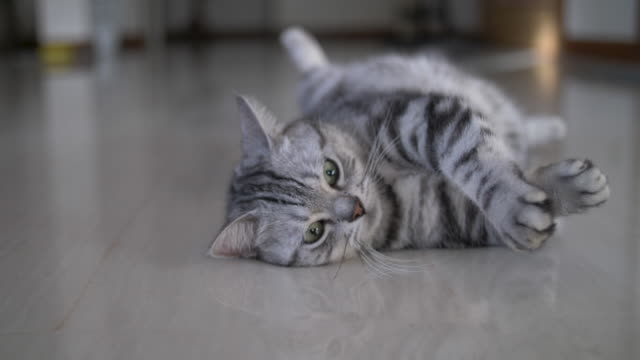 cute cat sleeps on the floor - grey colour stock videos & royalty-free footage
