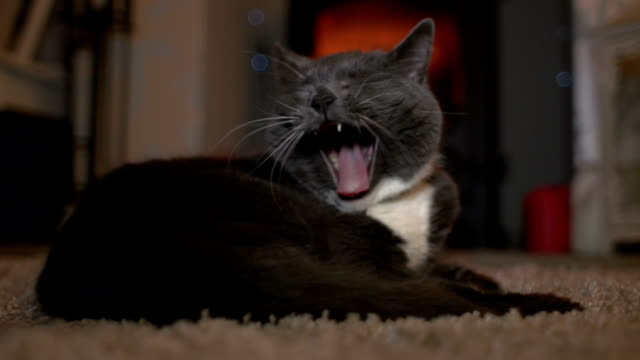 Cute Cat yawning in front of cosy log fire