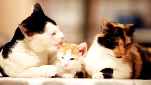 Cute cats family resting.