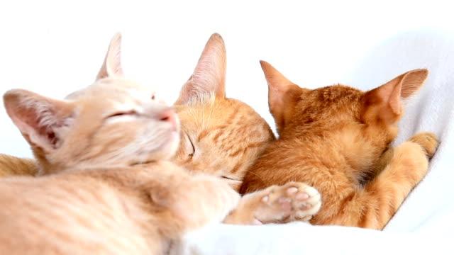 Niedliche Katzen-Familie