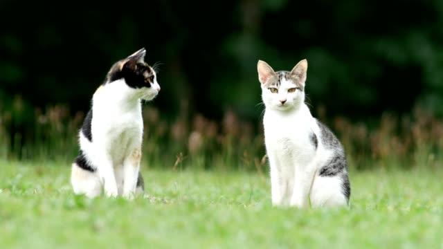 vídeos y material grabado en eventos de stock de gatos lindos en la yarda. - curiosidad