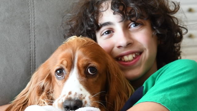 cute child boy playing with his cocker spaniel dog pet - spaniel stock videos and b-roll footage