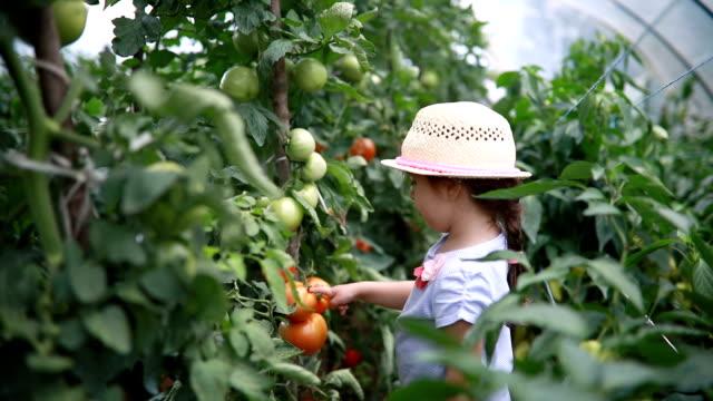 vidéos et rushes de enfant mignon dans une serre tomate de comptage - ferme bâtiment agricole