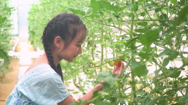 かわいい子供は、彼女の最初の成長したトマトを見て、保持しています - 栽培する点の映像素材/bロール