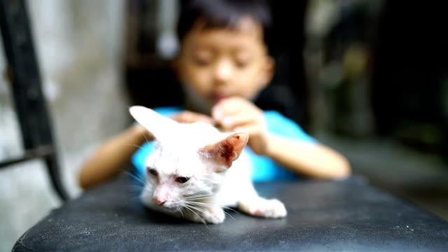 vídeos y material grabado en eventos de stock de linda niños y gato - hutong