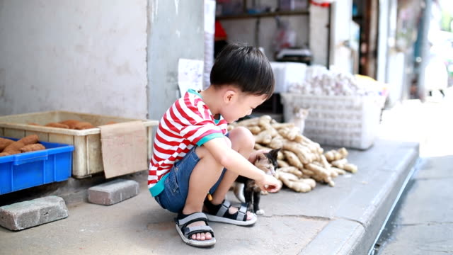 cute children and cat - hutong alley stock videos & royalty-free footage