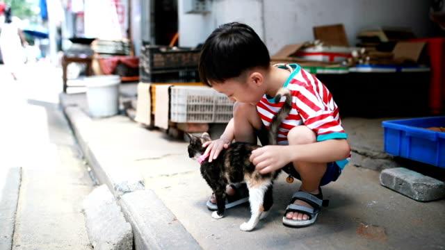 vídeos de stock, filmes e b-roll de linda crianças e gato - pelo animal