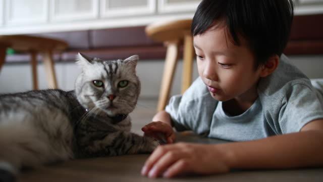 stockvideo's en b-roll-footage met schattige kinderen en kat - alleen jongens