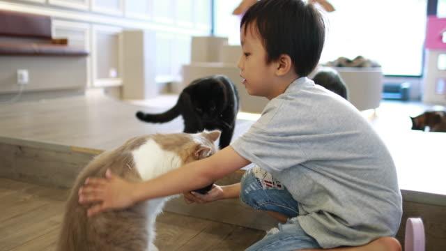 vídeos y material grabado en eventos de stock de linda niños y gato - niñez