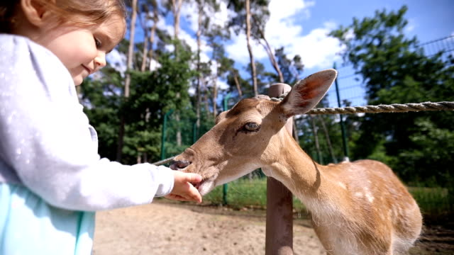 cute daughter and her mother feeding the animals - zoo stock videos & royalty-free footage