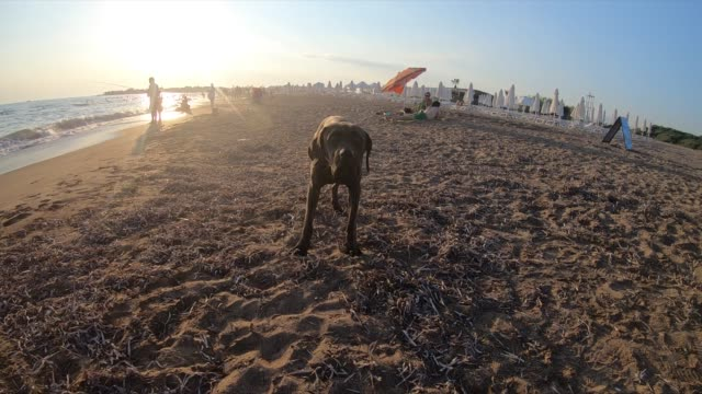 cute dog at the beach - hound stock videos & royalty-free footage
