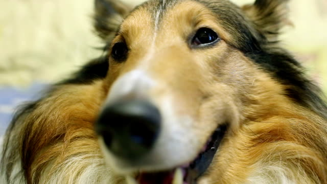 vídeos y material grabado en eventos de stock de adorables perros en primer plano - nariz de animal