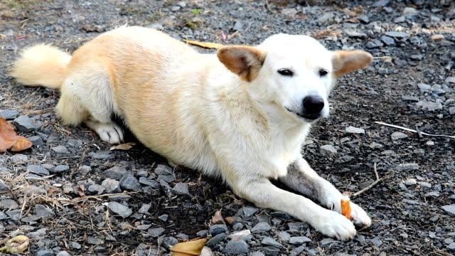Cute dog eating bone