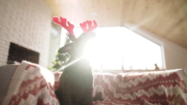 cute dog in deer costume - dressing up stock videos & royalty-free footage
