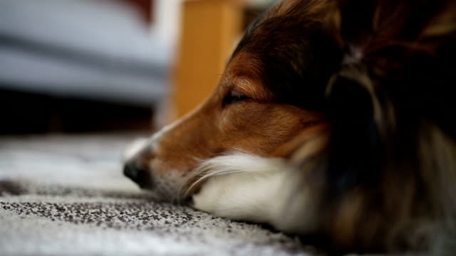 Cute dog lying on the carpet