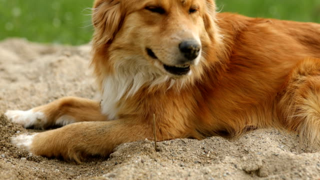cute dog playing outdoors - loyalty stock videos & royalty-free footage