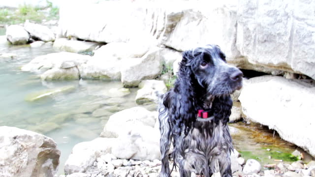 Cute dog shaking off water