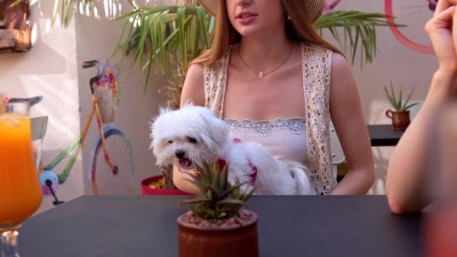 netter hund sitzt im schoß ihrer besitzerin - brustwarze stock-videos und b-roll-filmmaterial