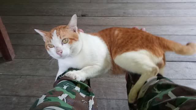 vídeos de stock, filmes e b-roll de gato doméstico bonito, gatinhos brincalhão - domestic animals