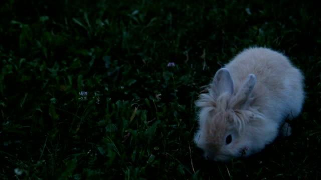 かわいいイースターバニー - 動物の子供点の映像素材/bロール