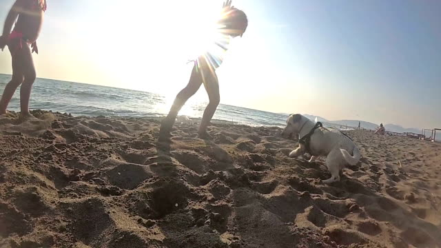 cute family playing ball with the dog slowmotion - jack russell terrier stock videos & royalty-free footage