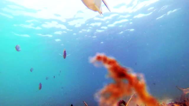 Cute Fish from the ocean floor