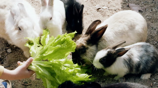 vídeos de stock e filmes b-roll de cute fluffy bunny eating lettuce - alface