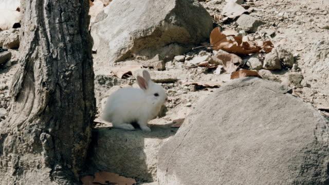 stockvideo's en b-roll-footage met schattige fluffy bunny eten van sla - cottontail