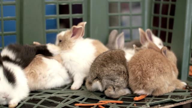 stockvideo's en b-roll-footage met cu: schattige pluizige lichte bruine en witte baby konijntje - cottontail