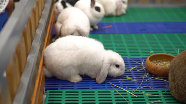 cute fluffy white baby bunny. - cottontail stock videos & royalty-free footage