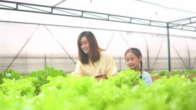 かわいい女の子と彼女の母親は温室で水耕野菜を収穫 - 収穫する点の映像素材/bロール
