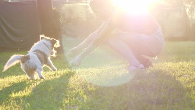 vídeos de stock e filmes b-roll de cute girl and puppy having fun - one animal