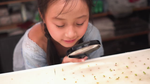 cute girl inspecting experiment of hydrophonic sprout by using magnifying glass - controllo di qualità video stock e b–roll