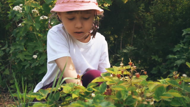 cute girl picking berries - berry fruit stock videos & royalty-free footage